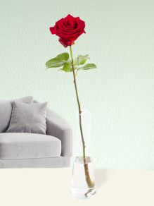 Single red rose, including glass vase