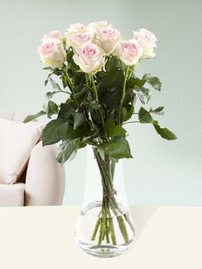 10 soft pink roses - Sweet Revival