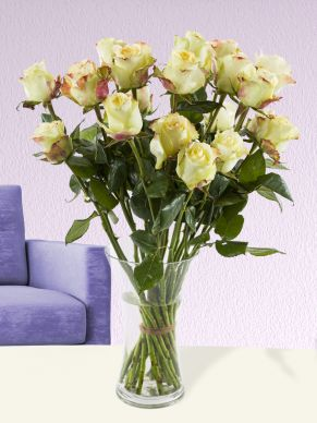 20 cream roses from Ecuador