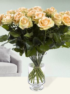 20 salmon-coloured roses - Avalanche Peach