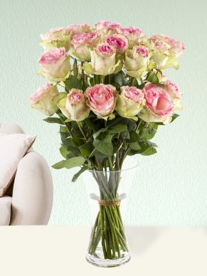 20 soft pink roses from Ecuador