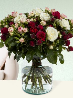 30 wild roses red - soft-pink - white