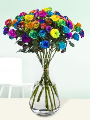 Spray roses rainbow