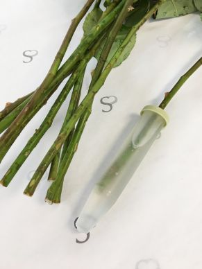 Water tubes for roses 24 ml - 10 pieces