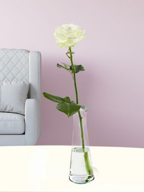 Single white rose, including glass vase