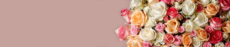Alls Surprose's roses