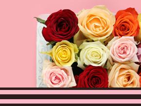 Roses bunt