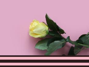 yelow rose