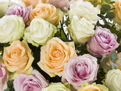 Online a bouquet of roses