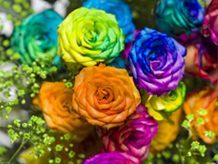 Buy yourself rainbow roses