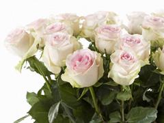 Buy roses online