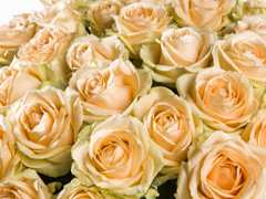 Choose your amount of salmon coloured roses