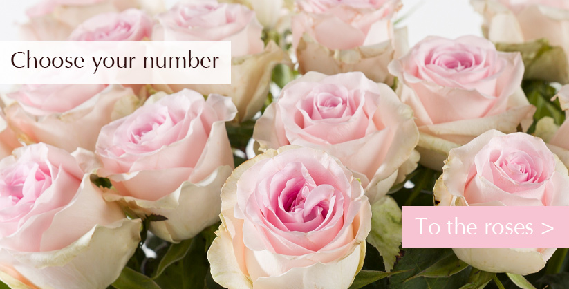 Choose your number of roses