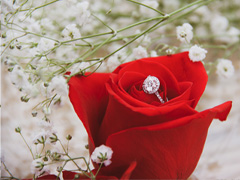 Decorate your wedding with roses