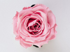 Roses per piece