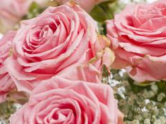 Exclusive roses: Sophia Loren