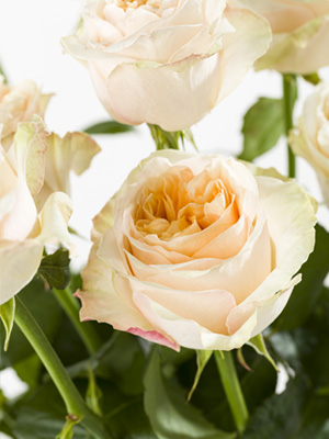 Exclusive roses: Victorian