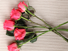 Strongly scented roses