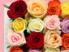 Colourfull rose bouquets