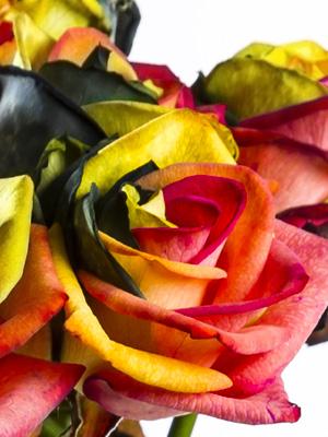 Sending roses to Belgium