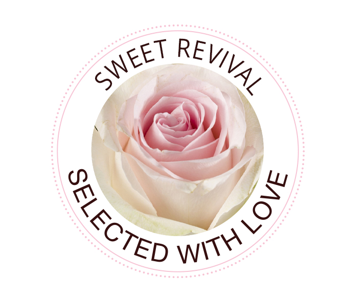 Sweet Revival roses