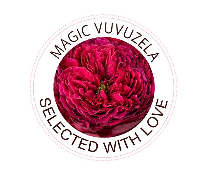 Magic Vuvuzela roses