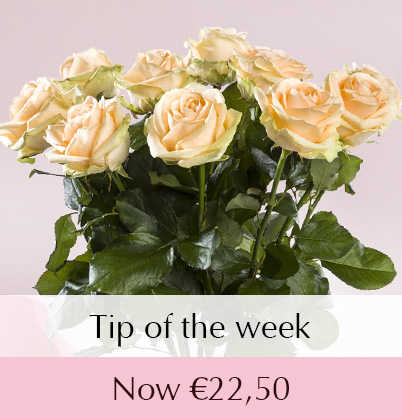 Salmon-coloured rose delivery