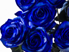 Order blue roses