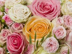 Order fresh colourfull roses