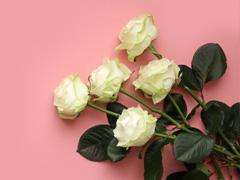 Large white roses