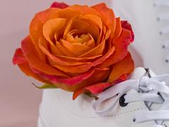 A orange rose