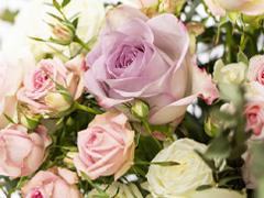 Order roses