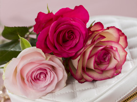 Pink rose delivery