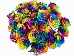 Order rainbow roses
