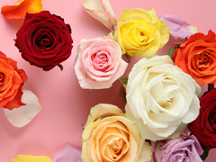 Roses in all colours