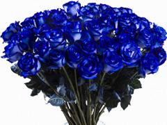 Send blue roses