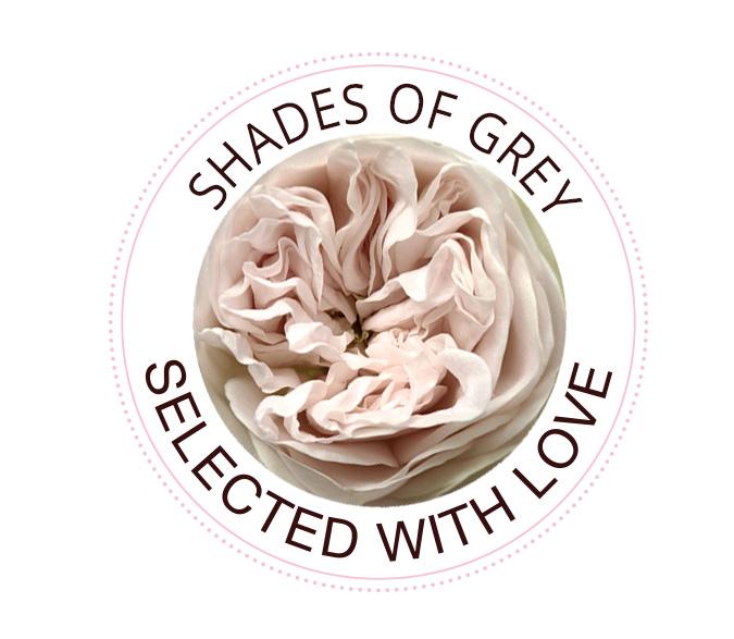 Shades of Grey roses