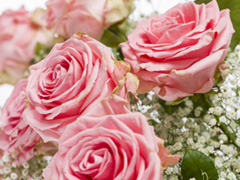Sophia Loren roses