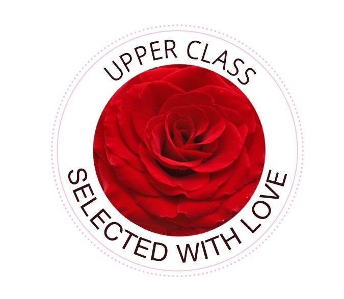Upper Class roses