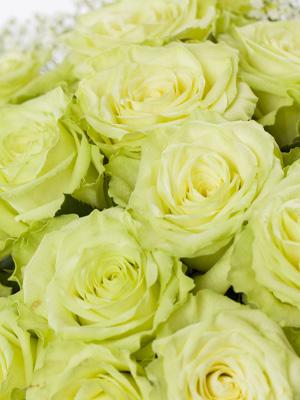 send green roses