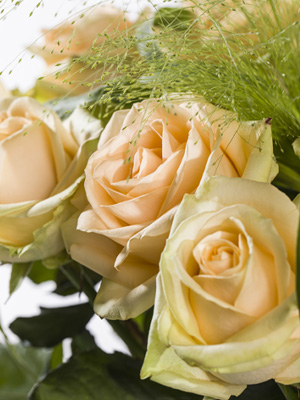 order and send salmon colored roses